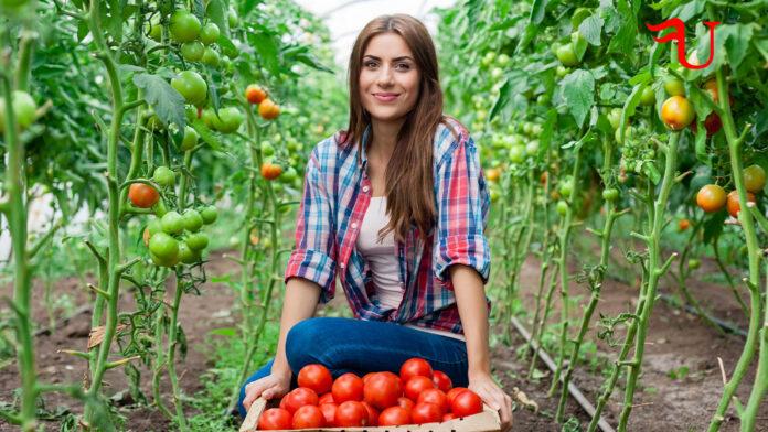 Curso adaptado al Certificado de Profesionalidad Agricultura Ecológica (AGAU0108) (vías no formales de formación)