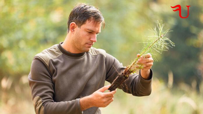 Título Oficial de Formación Profesional en Gestión Forestal y del Medio Natural - Pruebas Directas