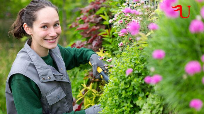 Curso adaptado al Certificado de Profesionalidad Instalación y Mantenimiento de Jardines y Zonas Verdes (AGAO0208) (vías no formales de formación)