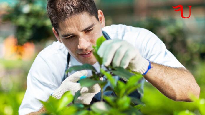 Curso Jardinería y Restauración del Paisaje