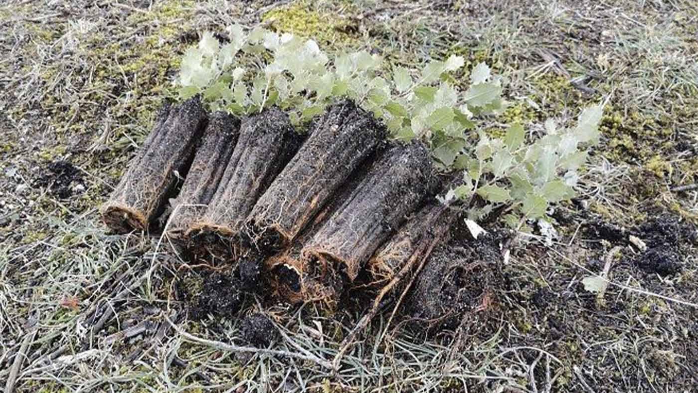 Formación Universitaria colabora con la reforestación